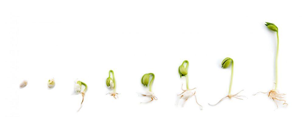 Vom Samen zur Keimlingspower