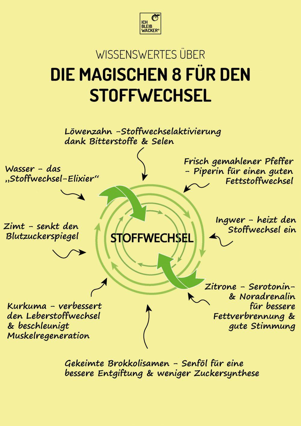 Infografik_Stoffwechsel