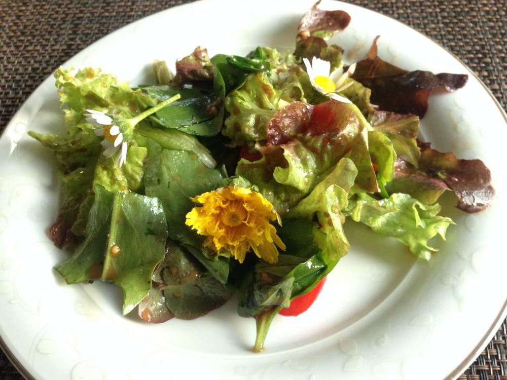 Löwenzahn als Salatbeilage