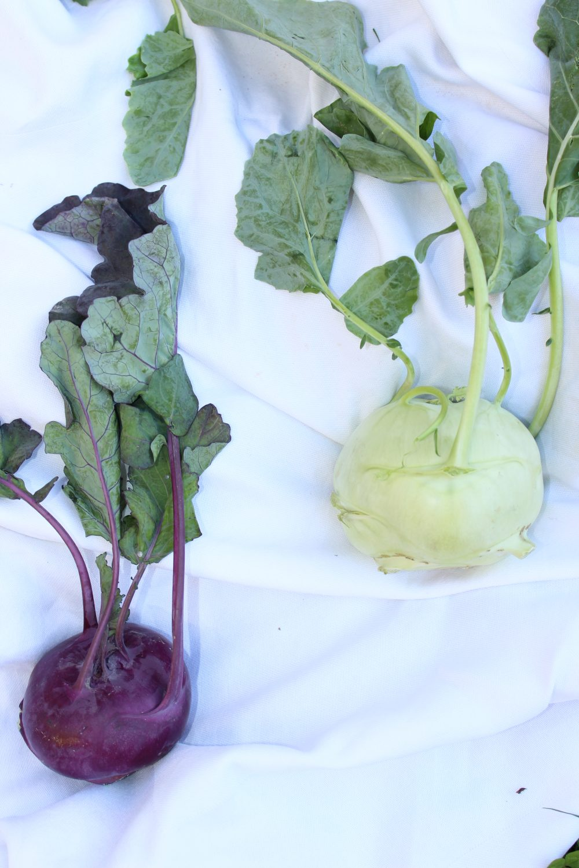 Kohlrabi, Basenbildner, Gemüse Ernte, Garten