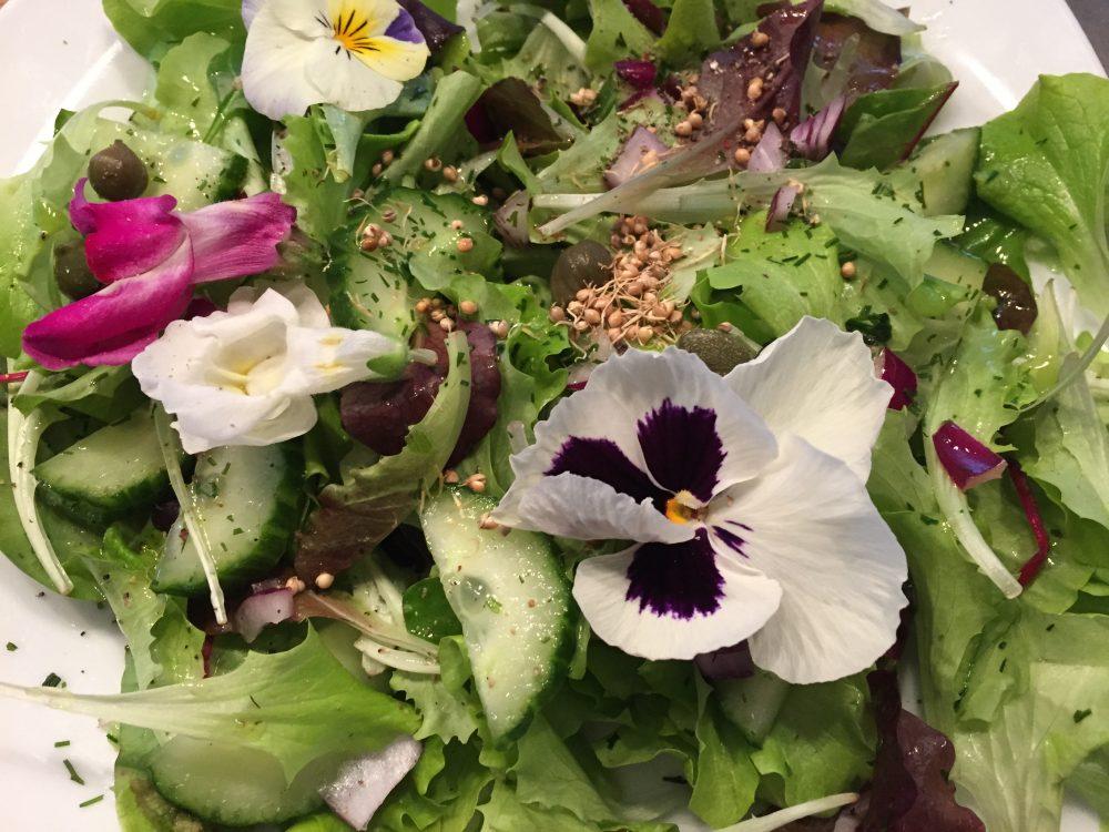 Salat, Braunhirse, Keimlinge, basenfasten