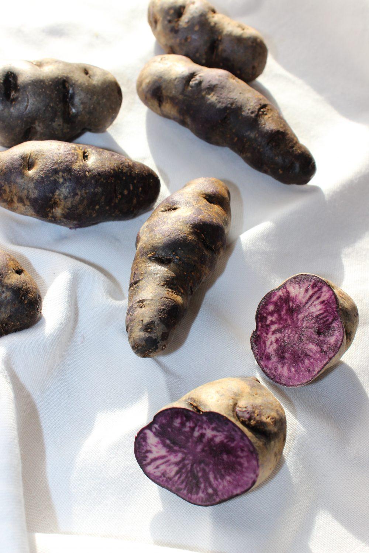 Vitelotte-Kartoffelvielfalt mit basenfasten